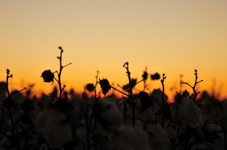 Sunset031